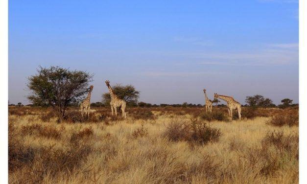 Le parc du Tarengire en Tanzanie