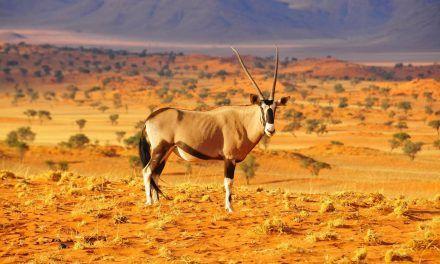 Généralités – notre carnet de route en namibie