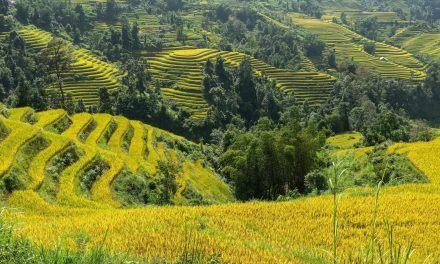 parcours vietnam